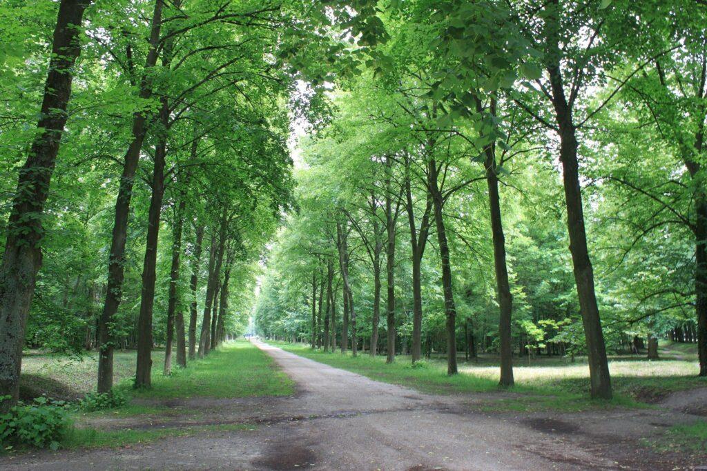 forest walks 2021 image