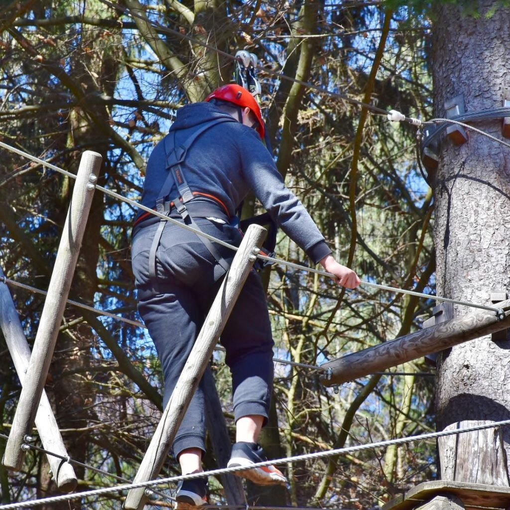 grizedale forest activities 2021